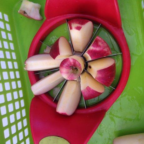 Apple-Picking at Miyata Apple Farm