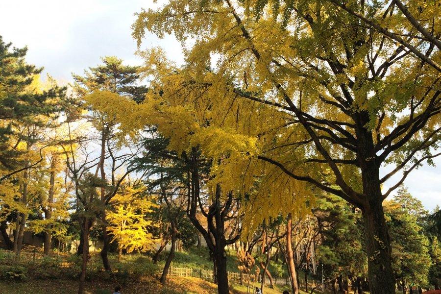 Chiba Park in Autumn