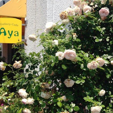 Aya Cafe Uno