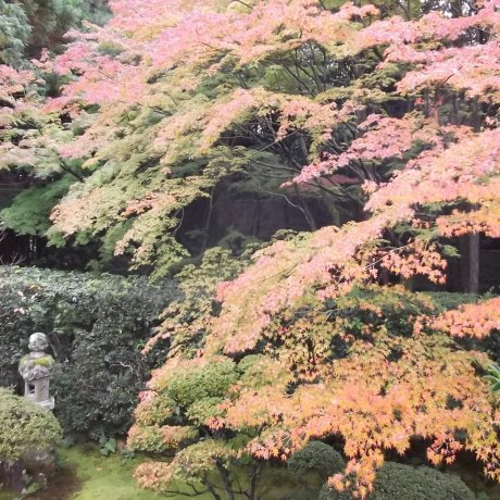 Keishun-in Temple in Kyoto