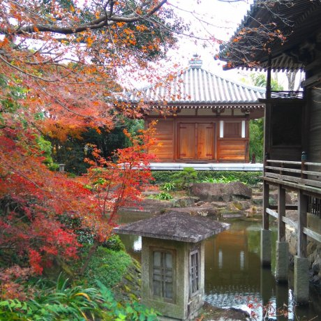 Temple of Aikido