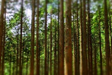 Day Trip to Mt. Kintoki