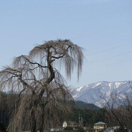 Nagano Countryside