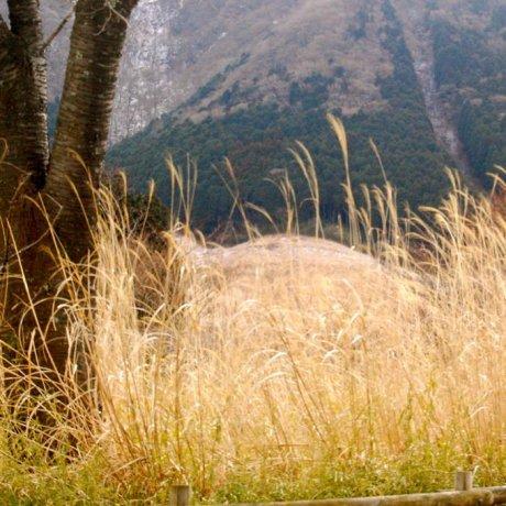 Explore Beautiful Hakone by Trail