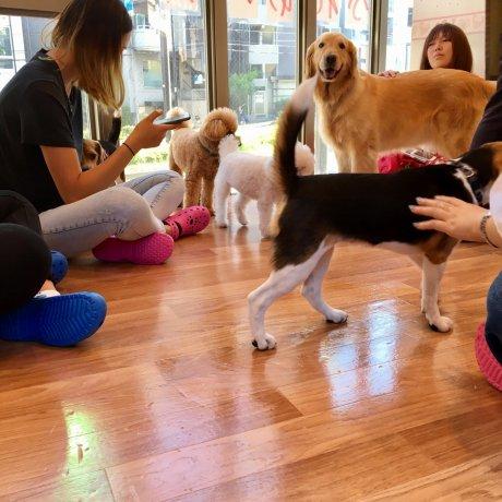 Dog Heart Cafe from Aquamarine