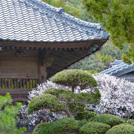 Kamakura Jufuku-ji Temple
