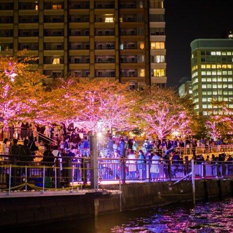 River Cruises and Winter Illuminations in Shinagawa