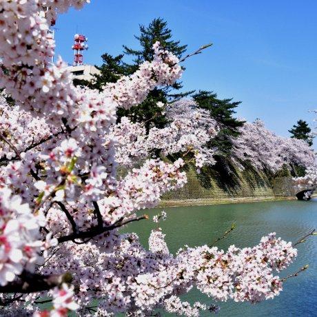 Fukui City