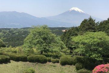 Hiking the Old Hakone Highway