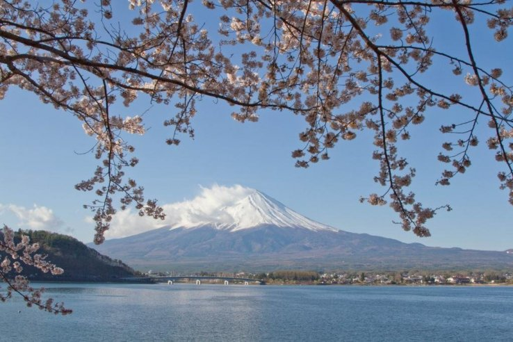 Spring in Japan is defined by cherry blossoms blooming across the country (Photo: Nicole Bauer)