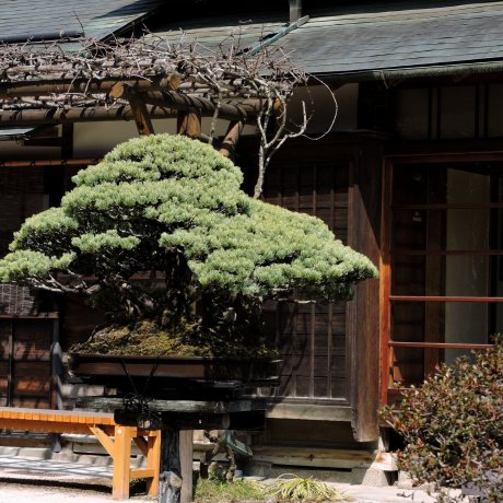 Takao Komagino Garden