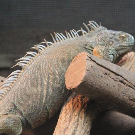 Reptilian and Crocodilian Paradise