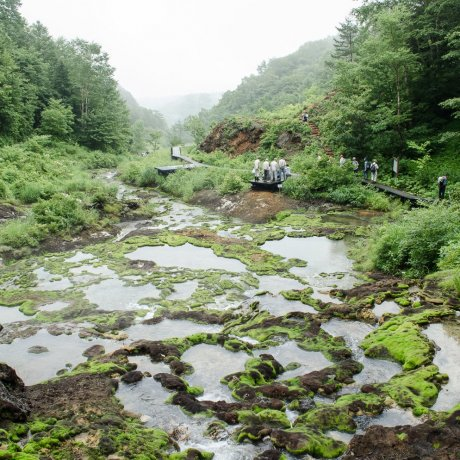 Chatsubomi-goke Moss Park
