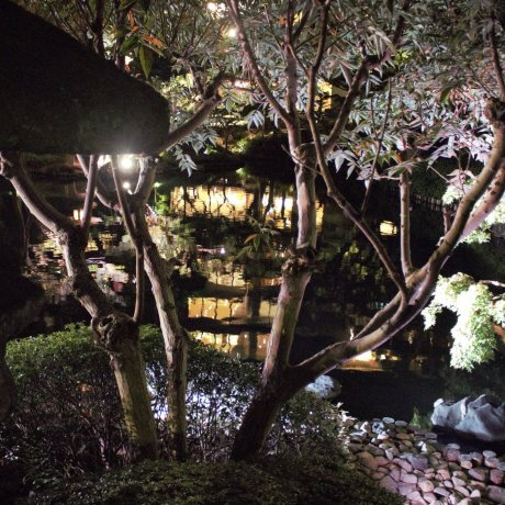 Tokyo Nightlife: An Evening For Two