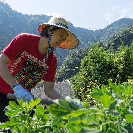 Live Like the Locals in Nishi-Awa