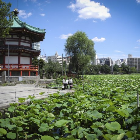 Stroll Through Picture-Perfect Ueno Park