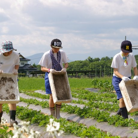 The Farm Life and Legends of Tono