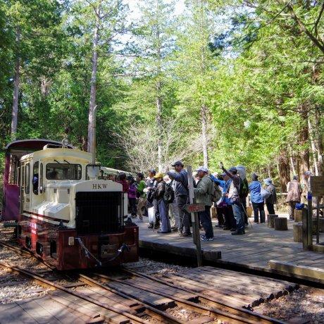 Agematsu Forest Adventures