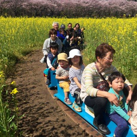 The 11th Kinchakuda Spring Festival