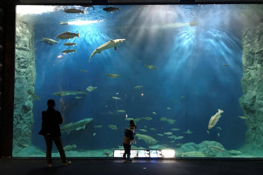 Chitose Salmon Hometown Aquarium