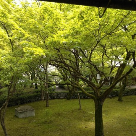 Kyoto's Temple of Genuine Paradise