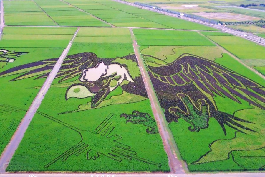 Rugby Rice Field Art