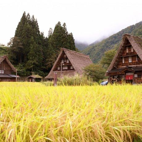 World-class Road Trip Between Tokyo & Osaka