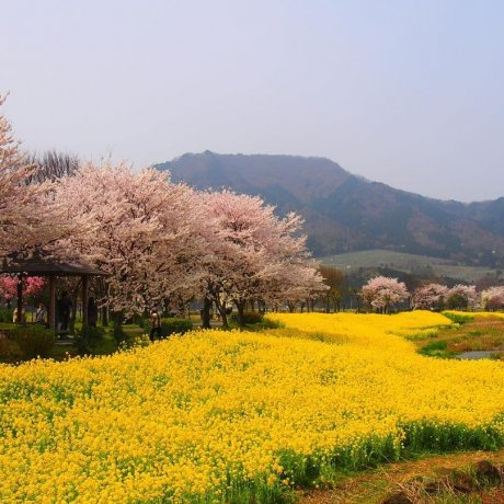 Uwasekigata Park