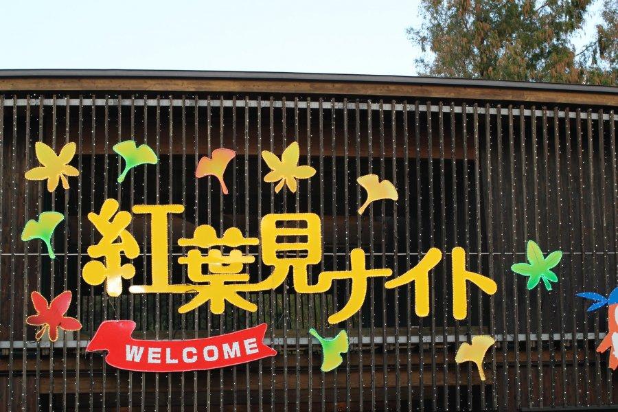 Fall Illumination Shinrin Park