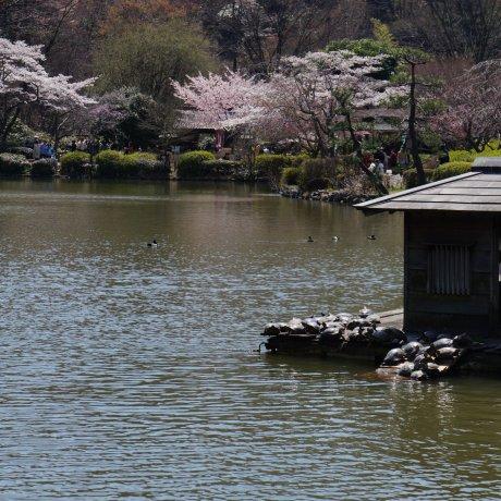 Tokyo's Machida City