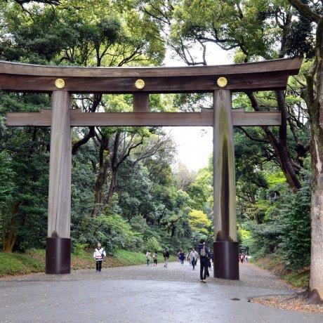 Top 5 Attractions around Meiji Jingu