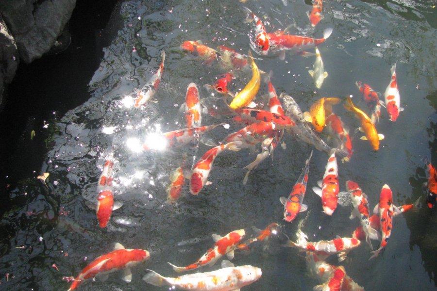 Fish in Japan