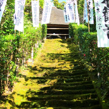 The Beautiful Moss Stairs of Sugimoto Temple