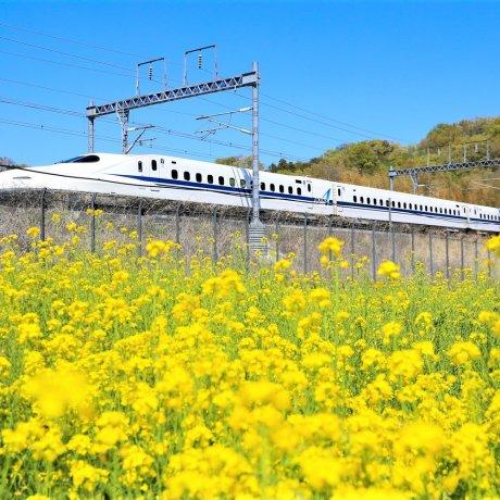 Japan Rail Tokai Flex Pass