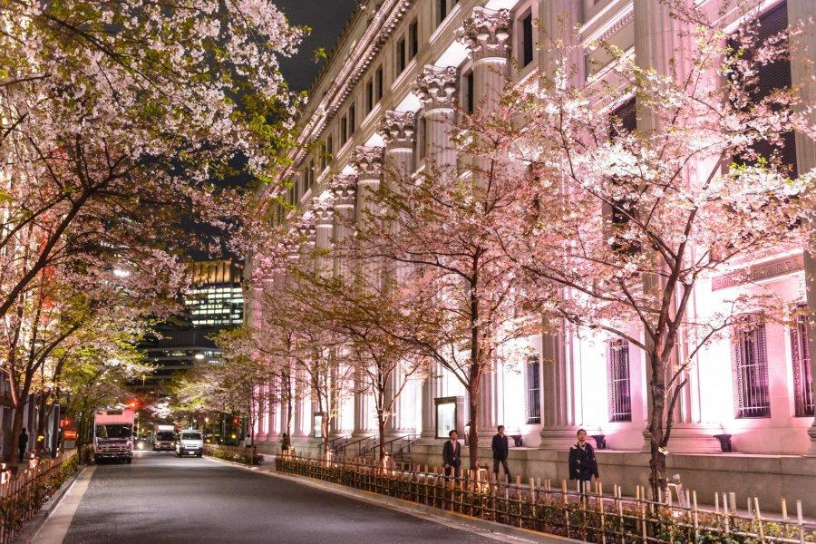 Sakura Fes Nihonbashi
