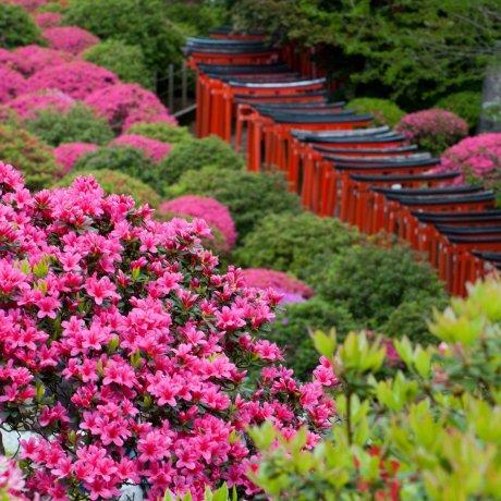 Tokyo's Top 3 Travel Rankings