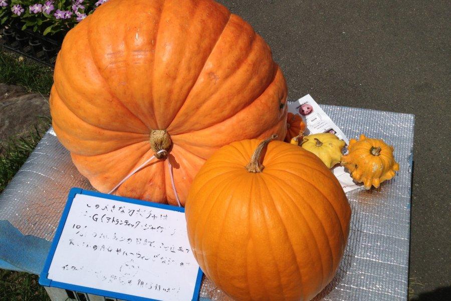 Yatsugatake Farmer's Market
