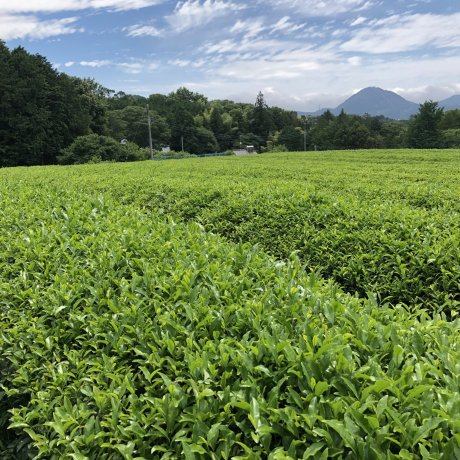 The Eight Tea Regions of Shizuoka