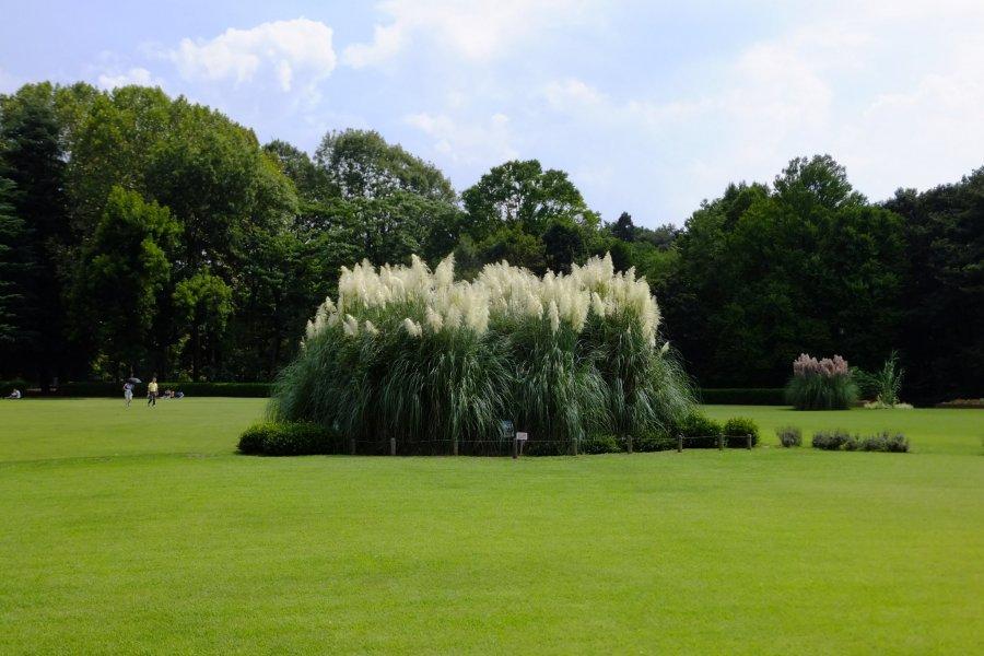 Chofu City - Parks & Gardens