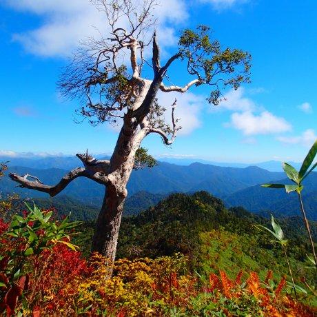 Naeba Fall Hiking