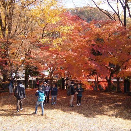 Fall at Mount Takao