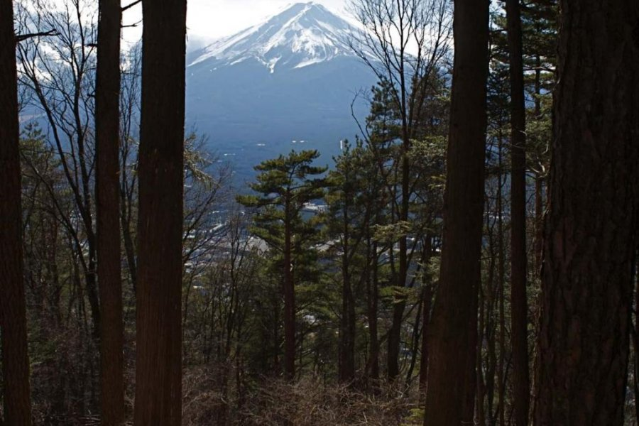 Horseback in the Foothills of Fuji