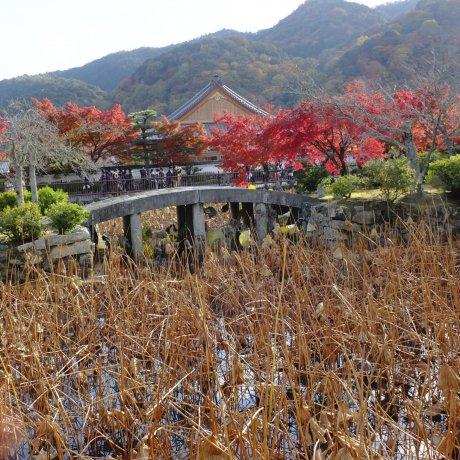 Autumn in Tenryu-ji Temple, Kyoto