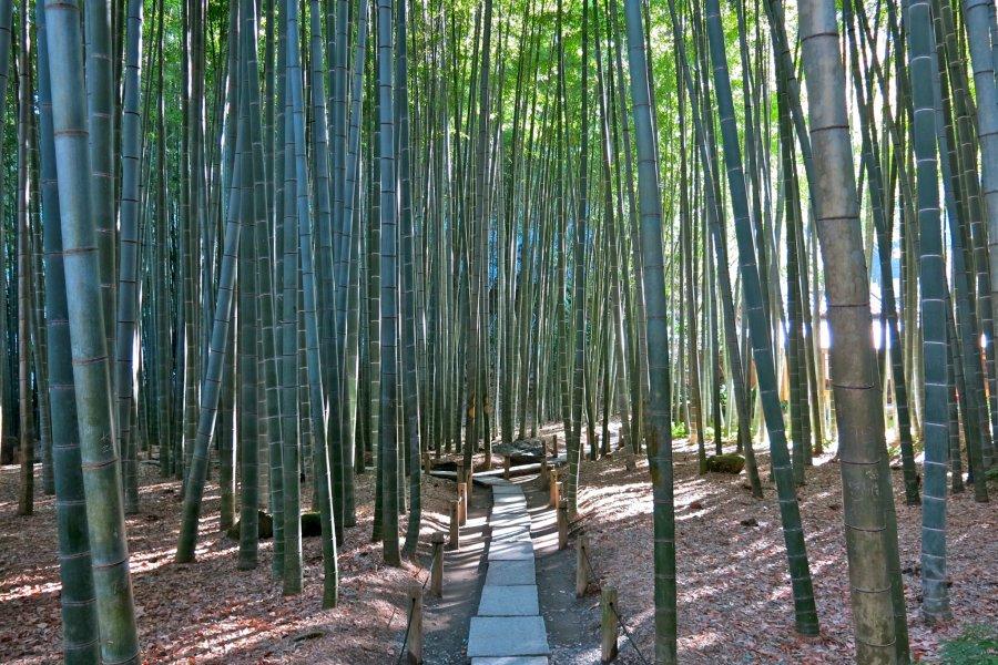 Hokokuji Bamboo Garden in Kamakura