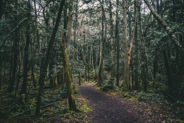 Aokigahara Forest